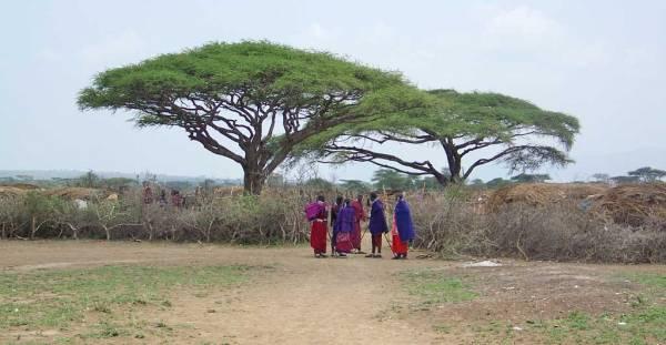 Maasai Boma Enclosure, Maasai Boma Safari