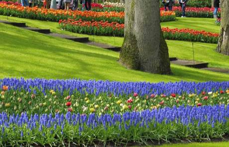 Amsterdam Layover, Keukenhof Gardens, April Tulips