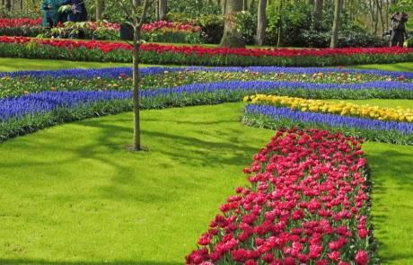 Amsterdam Layover, Keukenhof Gardens, Spring Tulips