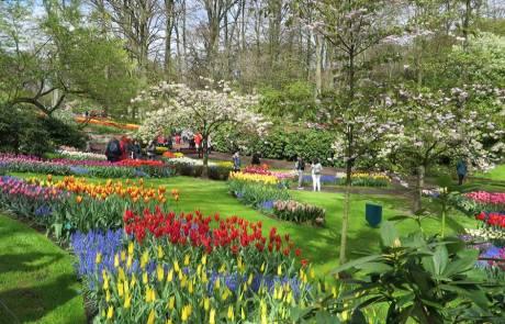 Keukenhof Gardens, Tulip Pathways