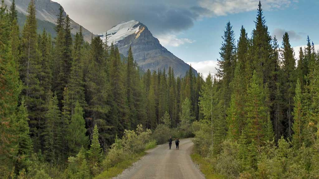 Lake O'Hara Access Hike, Banff Hiking Tour