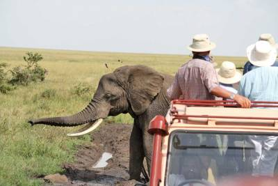 Tanzania Safari, Serengeti Land Rover and Elephant