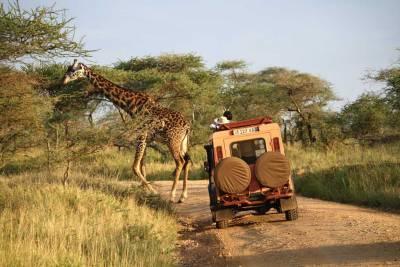 Tanzania Safari, Serengeti Land Rover and Giraffe