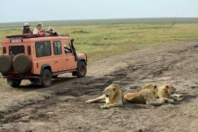 Tanzania Safari, Serengeti Land Rover and Lions