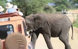 Elephant Crossing before Land Rover, Tarangire Safari