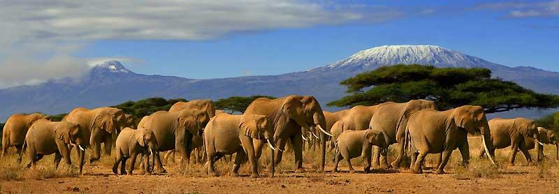 Elephants, Kilimanjaro, Amboseli Safari