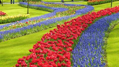 Amsterdam Layover, Keukenhof Gardens in April, Netherlands