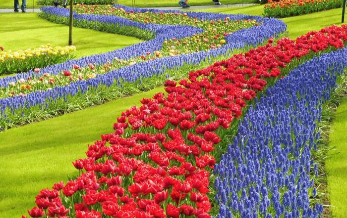 Amsterdam Layover, Keukenhof Gardens in April, Netherlands