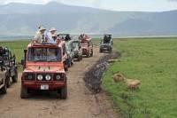 Lazy Lions, Ngorongoro Crater Safari