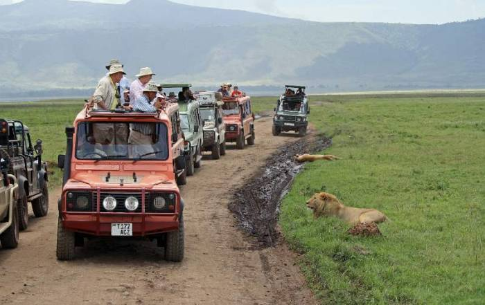Lazy Lions, Ngorongoro Crater Safari
