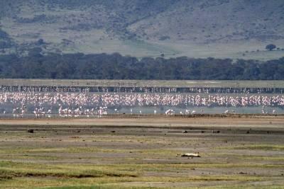 Lesser Flamingos, Ngorongoro Crater Safari, Tanzania