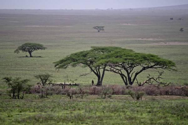Maasai herding in Ngorongoro Conservation Area, Olduvai Gorge Safari