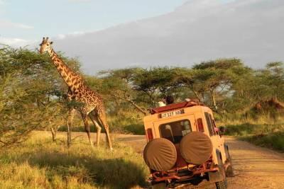 Serengeti Giraffe and Land Rover