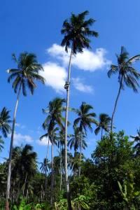 Spice Farm, Zanzibar Tour