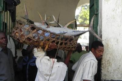 Stone Town Fish Market, Zanzibar Tour