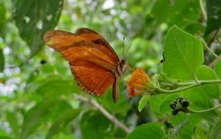 Butterfly, Iguazú Falls Argentina Visit