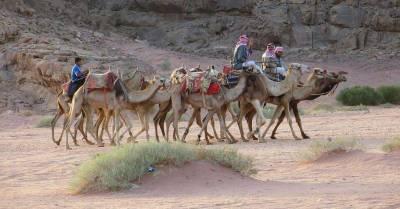 Camels, Wadi Rum, Exodus Travels Jordan Tour