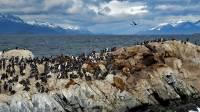 Cormorants, Sea Lions, Beagle Channel Cruise
