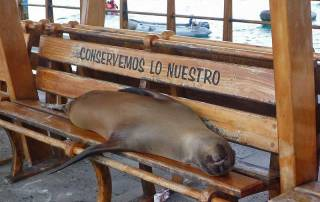 Galapagos Sea Lion relaxing at the port, San Cristobal Island
