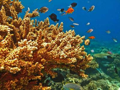 Visit Great Barrier Reef Marine Park