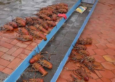 Lobster, Fish Market, Puerto Ayora Visit