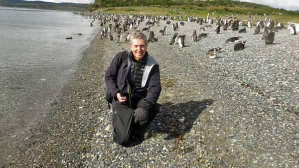 Tim, Martillo Island Penguin Colony
