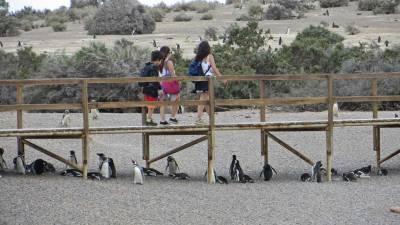 Walk among Magellanic Penguins, Punta Tombo Shore Excursion