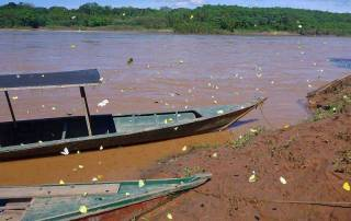 Butterflies, Wooden Boats, Tambopata River Adventure