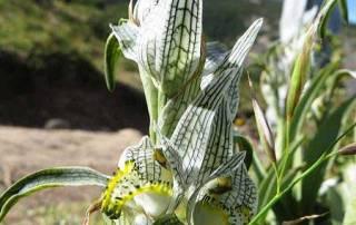 Magellan Orchid, Hiking Torres del Paine W Circuit Trek