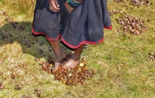 Stomping Potatoes, Chinchero Community Visit