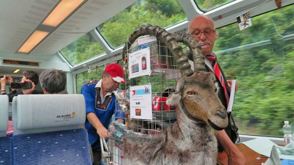 Glacier Express Alpine Ibex Vending Cart, Switzerland Train Trip