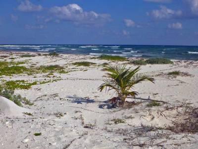 Punta Sur Ecological Park, Visit Cozumel
