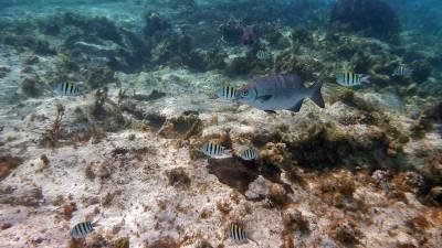 Snorkeling, Punta Sur Reef, Visit Cozumel
