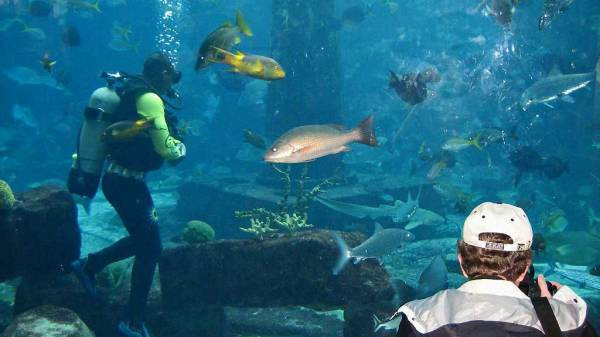 Atlantis Aquarium, Nassau, Visit the Bahamas