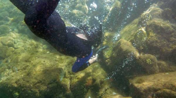 Snorkeler, Champagne Reef Snorkel, Dominica