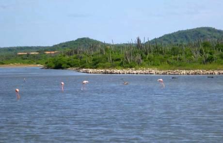 Flamingos near Kralendijk, Bonaire Biking Excursion