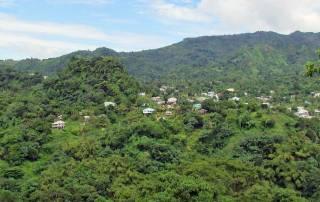 Rainforest, Grenada Island Tour