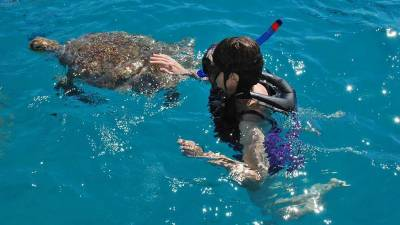 Touching Green Sea Turtle, Barbados Turtle Snorkel