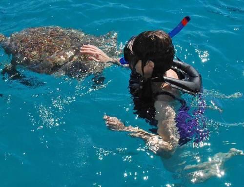 Barbados Turtle Snorkel