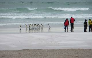 Volunteer Point King Penguin Beach Walk, Falklands