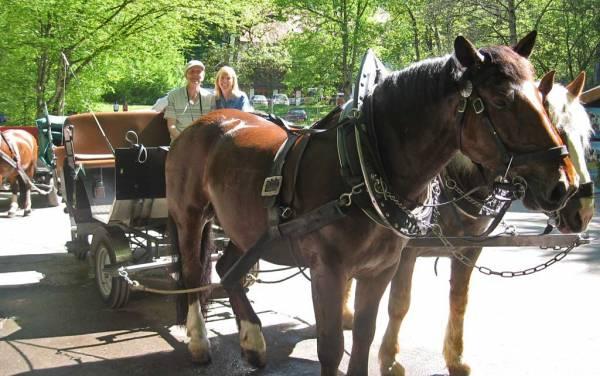 Horse-drawn Wagon Ride, Neuschwanstein Castle Visit