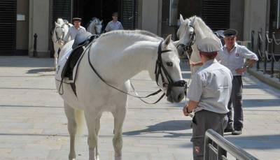 Lippizaner Stallion, Visit Vienna