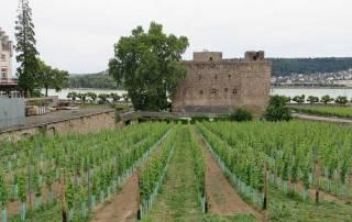 Wine Museum, Visit Rüdesheim