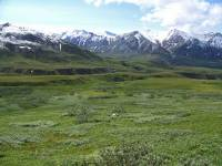 Grizzly Meadow, Denali Day Tour