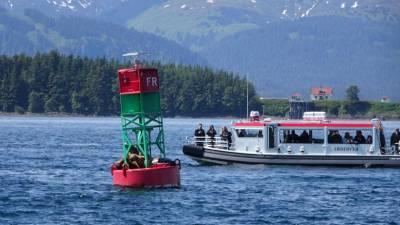 Steller's Sea Lions, Juneau Whale Watching, Star Princess Alaska Cruise