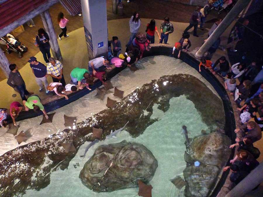 Ray and Shark Touching Pool, Georgia Aquarium