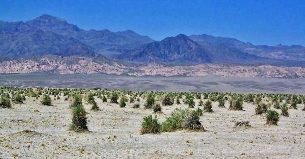 Devil's Cornfield, Death Valley