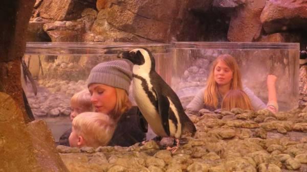 Penguin Pop Up, Georgia Aquarium