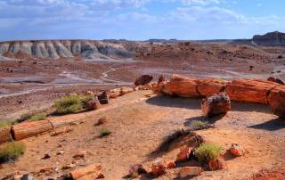 Petrified Forest, Grand Canyon Area Tour