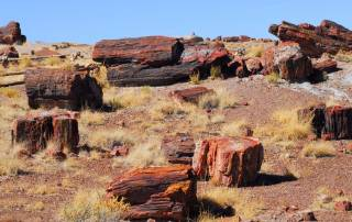 Petrified Forest National Park, Grand Canyon Area Tour